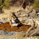 Afrikaans Sprachkurs lernen